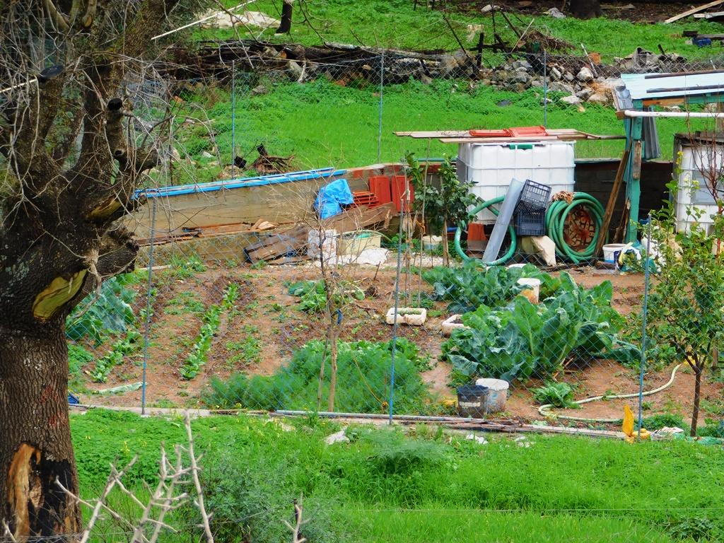 vegetable garden pedi