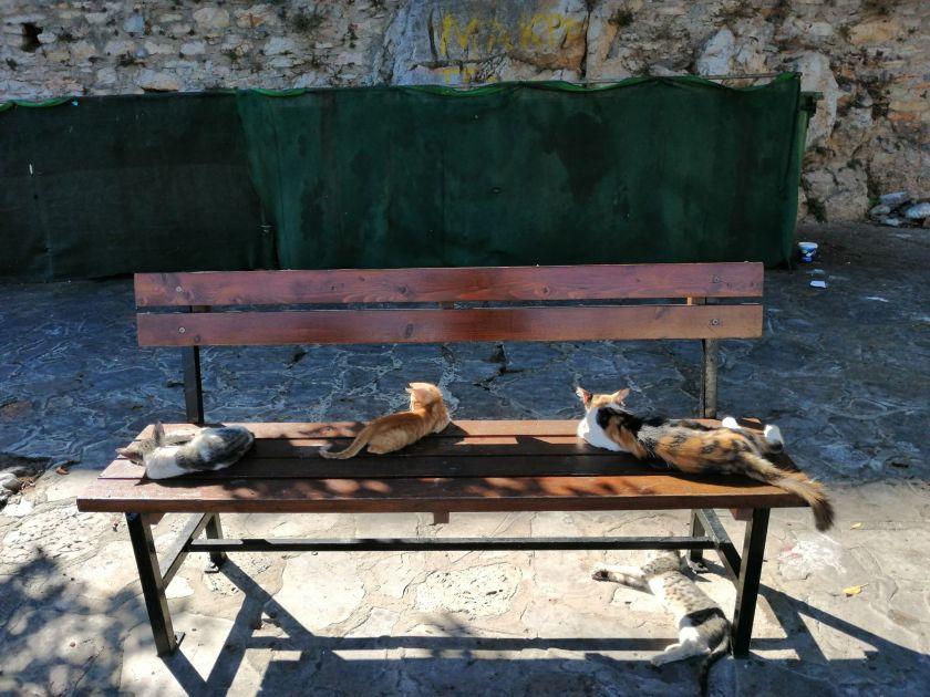 Yialos bin cats