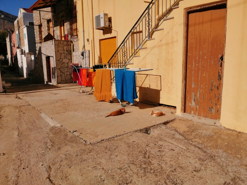 Pedi cats in the sun