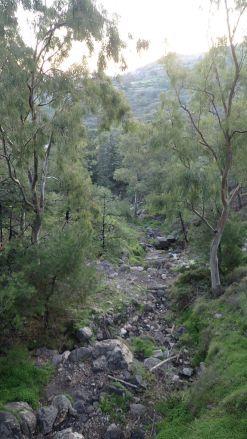 Kalderimi forest