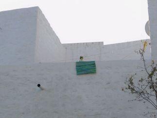 Patmos Chora cat 12 Jan 20202